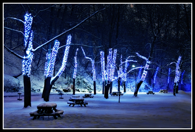blue-led-christmas-lights-trees