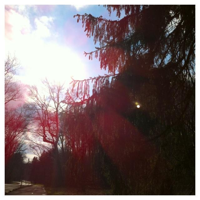 flare tree