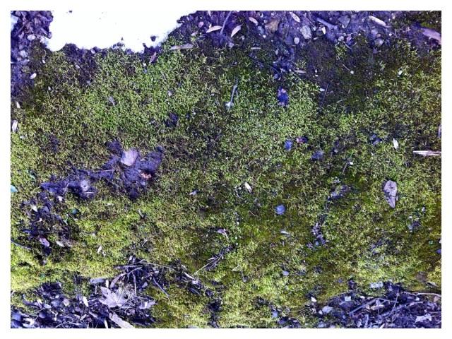 Moss Spring