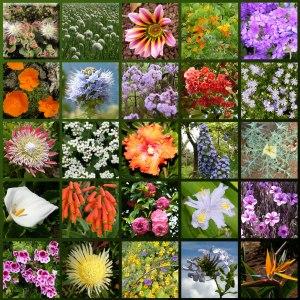 Madeira-flowers_hg