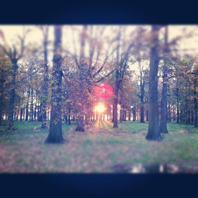 Impett Park at Sunrise