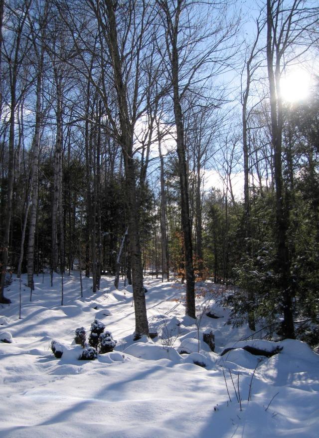 snow sun 1