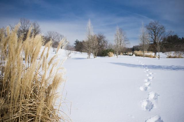 sunny snow