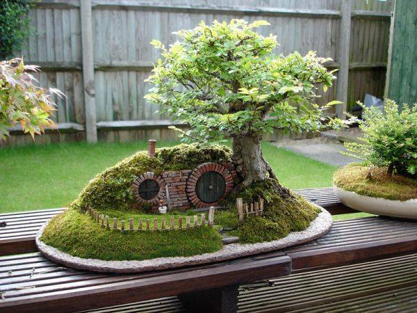 hobbit bonsai