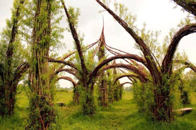 willow cathedral