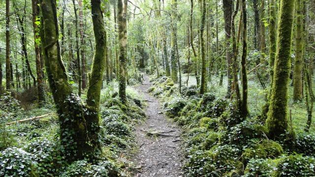 Dromore_Wood_path