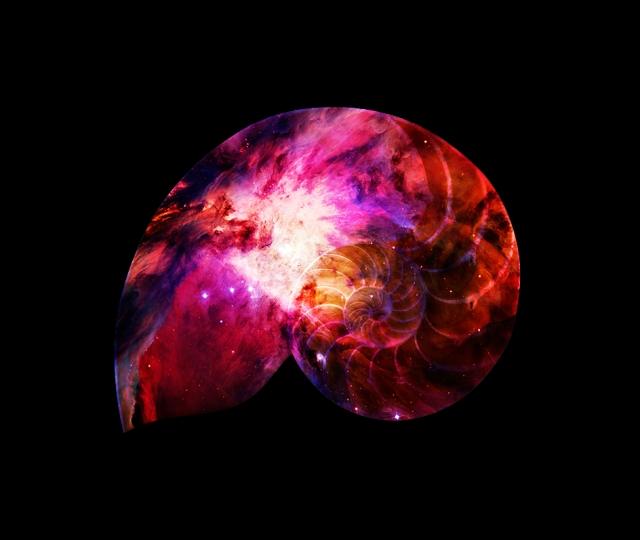 Nebula-Nautilus-Shell